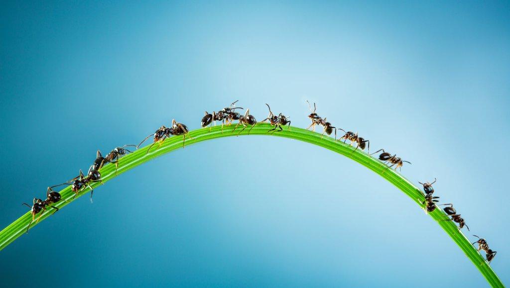 Informacje, nasz cyfrowy fast food. Jak odnieść sukces wspołeczeństwie współpracy?